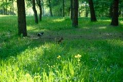 MOSCA RUSSIA Parco con uno scoiattolo fotografie stock