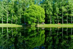 Mosca/Russia - riflessione degli alberi verdi sullo stagno, vista della molla di calma dalla riva dello stagno immagini stock