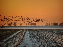 Mosca salvaje de la salida del sol Fotografía de archivo libre de regalías