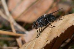 A mosca senta-se em uma folha Fotos de Stock
