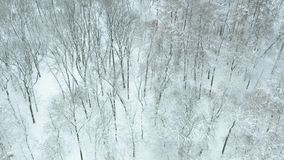 Mosca sobre parque nevoso metrajes