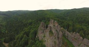Mosca sobre rocas sobre bosque almacen de metraje de vídeo