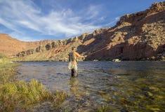 Mosca solit?ria Fisher no Rio Colorado perto dos Lee Ferr, o Arizona imagem de stock