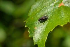 mosca Uma folha de uma planta Fotos de Stock