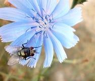 Mosca y flor Fotos de archivo libres de regalías