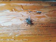 moscas foto de archivo libre de regalías