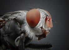 moscas fotografía de archivo libre de regalías