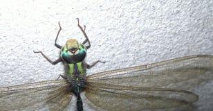 moscas Fotos de Stock Royalty Free