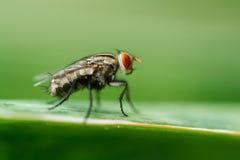 moscas Foto de archivo