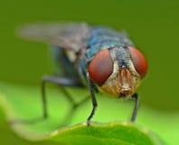 moscas Fotos de archivo libres de regalías