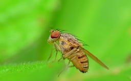moscas Imágenes de archivo libres de regalías