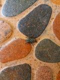 moscas imagens de stock