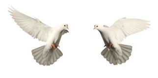 Moscas blancas de la paloma Fotografía de archivo libre de regalías