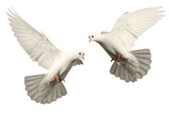 Moscas blancas de la paloma Foto de archivo