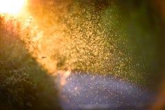 Moscas borrosas hechas excursionismo en el sol imagenes de archivo