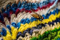 Moscas coloridas Fotografía de archivo libre de regalías
