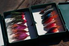 Moscas de la trucha arco iris en caja fotos de archivo libres de regalías