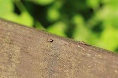 Moscas minúsculas Fotografía de archivo