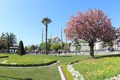 Moschea blu, Costantinopoli Immagini Stock Libere da Diritti