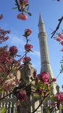 Moschea turca fotografie stock libere da diritti