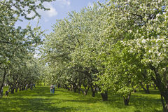 Moscou, jardins de Kolomenskoye Imagem de Stock