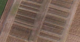 Moscou Oblast, Rússia Campos de trigo na parte superior video estoque
