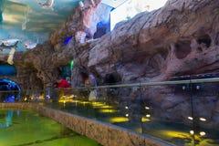 Moscou, Rússia - 10 de dezembro 2016 Oceanarium interior da cidade do açafrão em Krasnogorsk Fotografia de Stock