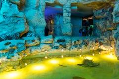 Moscou, Rússia - 10 de dezembro 2016 Oceanarium interior da cidade do açafrão em Krasnogorsk Fotos de Stock Royalty Free