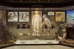 Moscou, Rússia - 24 de fevereiro de 2016: Estado Darwin Museum fotografia de stock royalty free