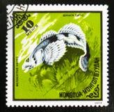 MOSCOU, RUSSIE - 15 JUILLET 2017 : Un timbre imprimé au Cuba me montre Image stock