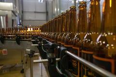 moscow Россия 7-ое февраля 2018: Пустые пивные бутылки, на конвейерной ленте, Binding винзавод Стоковые Изображения