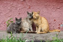City cats family, RUSSIA/Moscow. Moscow cats family resting in the sunlight Royalty Free Stock Image