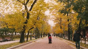 MOSCOW - CIRCA NOVEMBER 2017: People walking in park with yellow trees on calm autumn day. People walking in autumn park with yellow trees on autumn day stock video