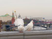 Moscow city, capital of Russia royalty free stock images