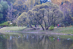 Moscow city park. Moscow city beautiful old park in autumn stock photos