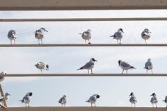 Seagull Notepad Royalty Free Stock Photos
