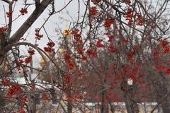 moscow passeio ao inverno de Moscou foto de stock