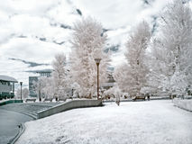 Moscow public garden. Infrared photo Royalty Free Stock Photos