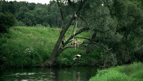 MOSCOW REGION, RUSSIA - JUNE 24, 2017. Slow motion shot of a boy jumping off the tree into the river. Summer vacation. MOSCOW REGION, RUSSIA - JUNE 24, 2017 stock video