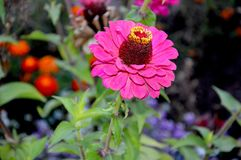 Flower in the garden royalty free stock photography