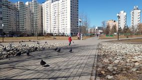Moscow, Russia-April 22.2018. The child is playing with birds on boulevard. Moscow, Russia-April 22.2018. The child is playing with the birds on the boulevard stock video footage