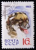 MOSCOW, RUSSIA - APRIL 2, 2017: A post stamp printed in USSR shows Caucasian Shepherd, serie dogs breeds, circa 1965 royalty free stock photography
