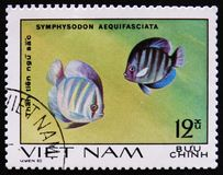 Symphysodon aequifaciata, Aquarium fishes serie, circa 1980 Stock Photo