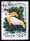 Cattle egret Bubulcus ibis in the Qizil-Aghaj State Reserve, circa 1976. MOSCOW, RUSSIA - APRIL 2, 2017: A stamp printed by the Soviet Union Post is devoted to Royalty Free Stock Image