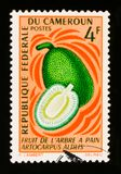 Breadfruit Artocarpus altilis, circa 1967. MOSCOW, RUSSIA - AUGUST 29, 2017: A stamp printed in Cameroon shows Breadfruit Artocarpus altilis, circa 1967 Stock Photos