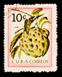 Anon Annona reticulata fruit, circa 1963. MOSCOW, RUSSIA - AUGUST 29, 2017: A stamp printed in Cuba shows Anon Annona reticulata fruit, circa 1963 royalty free stock photo