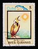 Eastern Meadowlark Sturnella magna, Endemic birds, Cuba circa 1983 Stock Photos