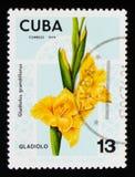 Gladiolus grandiflorus, Flowers serie, circa 1974 Stock Image