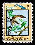 Great Lizard-Cuckoo Saurothera merlini, Endemic birds, Cuban circa 1983. MOSCOW, RUSSIA - AUGUST 29, 2017: A stamp printed in Cuba shows Great Lizard-Cuckoo royalty free stock photography