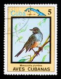 Red-legged Thrush Turdus plumbeus, Endemic birds, Cuban circa 1983. MOSCOW, RUSSIA - AUGUST 29, 2017: A stamp printed in Cuba shows Red-legged Thrush Turdus royalty free stock photography